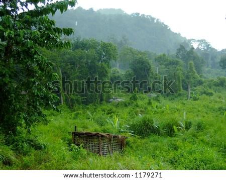 Raining in rainforest, Cambodia. - stock photo