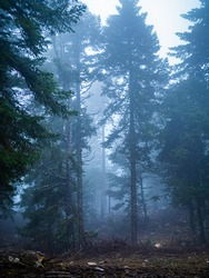 Rainy and foggy forest view