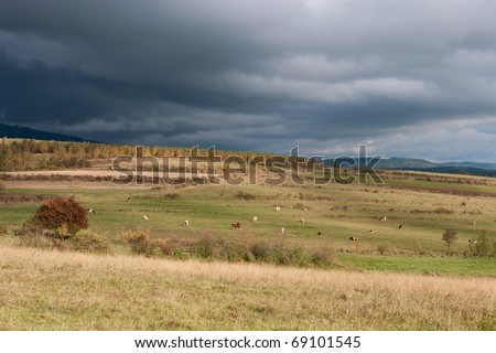 Rainy clouds above the meadow