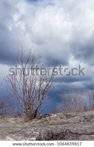 Rainy clouds over horizon. Naked branches of a shrub and grey stone surface on foreground. The foreground  is still under the sun and has a hope to survive, to be free. Gloomy sky with large clouds.  #1064839817