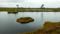 rainy day, rainy background, traditional bog landscape, bog lake in the rain, swamp grass and moss, small bog pines during rain, swamp in autumn, Nigula bog, Estonia