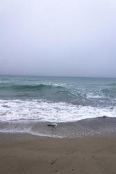 Rainy fog grey sky empty out of season seaside with sea gull walk on sandy wave sea beach