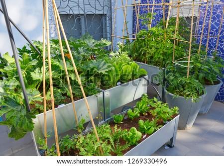 Raised bed orchard urban garden metal table Сток-фото ©