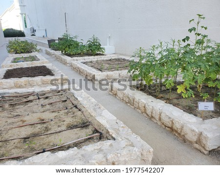Raised bed stone vegetable gardens in arid environment, Doha, Qatar; places to visit arid 2021 tourism  Photo stock ©