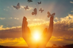 Raising human hands and butterfly on the sunset background