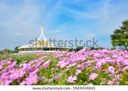 Rajamangala Hall with pink cosmos flower at Suanluang RAMA IX public park, Bangkok, Thailand.