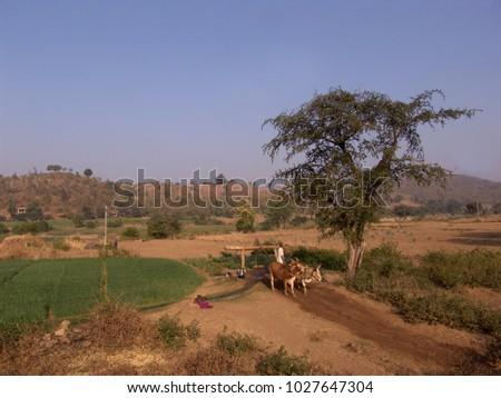 rajasthan  india   january 04...