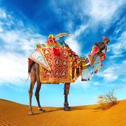 Rajasthan Indian Camel. Travel to India photography