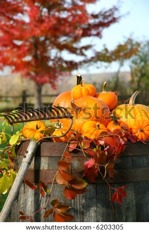 Rake and pumpkins laying on wine barrel
