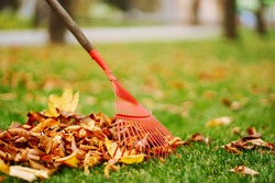 Rake with fallen leaves in autumn.  Man cleans the autumn park from yellow leaves. Volunteering, cleaning, and ecology concept. Seasonal gardening.