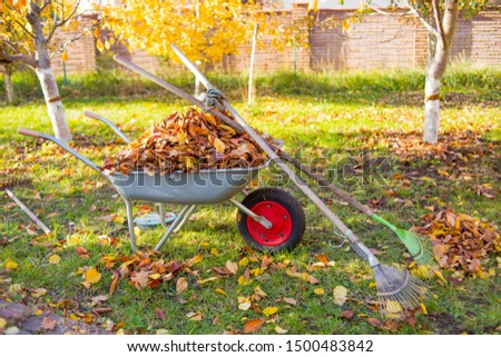 Raking fall leaves in garden. Wheelbarrow full of dried leaves. Autumn leaf cleaning. Pile of fall leaves with fan rake on lawn Stock photo ©