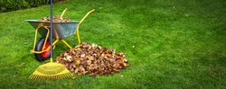 raking fallen autumn leaves from backyard lawn. copy space