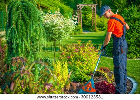 Raking in the Garden. Gardener with Rake at Work. Backyard Garden Summer Clean Up.