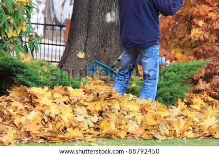Raking the autumn leaves. A person leaves with a lawn cleaner - stock photo