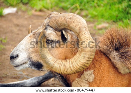 Ram Meanings and Symbolic Thoughts about the Ram The animal symbolism of the ram speaks of: Power, Force, Drive, Energy, Virility, Protection, Fearlessness.