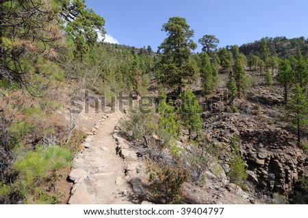 Rambling path in El Teide National Park, Canary Island Tenerife, Spain