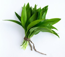 Ramson, bunch of wild garlic isolated on white background