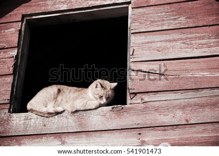 search pussy cat ranch