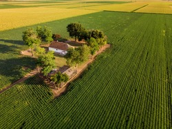 Ranch in late summer sunset in agricultural fields, Vojvodina landscape. Aerial flight over Green and lush Agricultural fields of Corn plants on sunny afternoon.