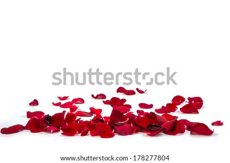 Stock Photo Random rose petals against white background. Great for presentations, forms and ad print.
