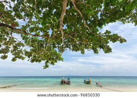 rantee bay beach with almond tree and long tail boats, ko phi phi, Thailand