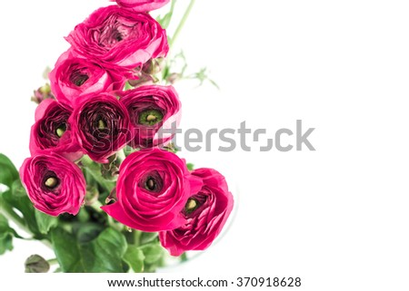Ranunculus isolated on white blur background