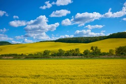 Rape flower field agains blue sky with hills, forests and a nice cloudscape. Spring landscape, vivid blue and yellow colors for backgrounds