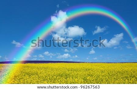 Rapeseed field and rainbow