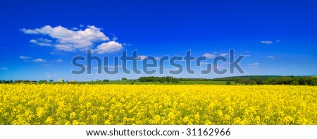 Rapeseed field in summer with blue sky and clouds