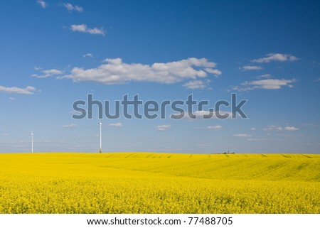 Rapeseed field with windmills in the distance and blue sky