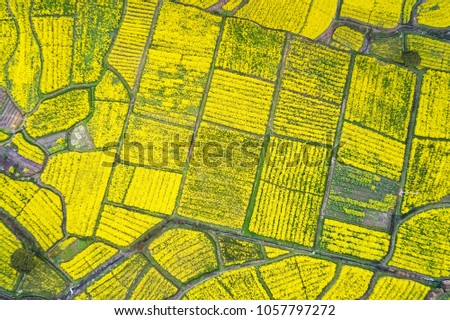 rapeseed flower blooming in farmland on mountainous area, aerial view of land color in spring - Shutterstock ID 1057797272