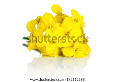 Rapeseed flower on white background Brassica napus blossom