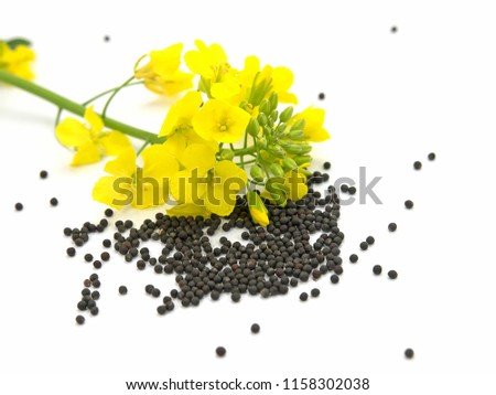 Rapeseed on white background - Shutterstock ID 1158302038