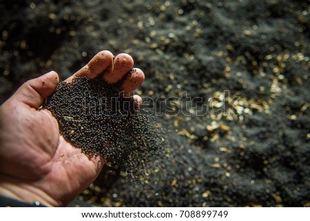 Rapeseed seeds in farmer's hand, freshly harvested #708899749