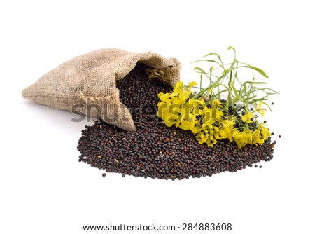 Rapeseed with flowers. Isolated. #284883608