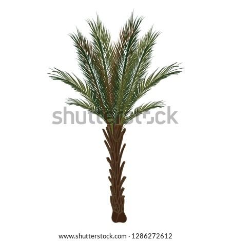 raphia palm tree Photo stock ©