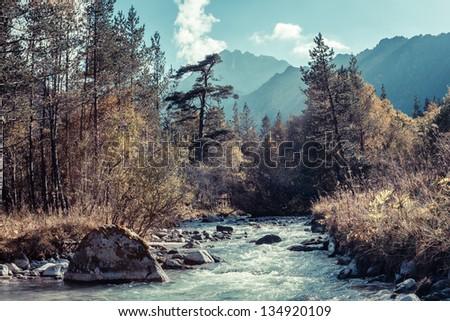 Rapid river in autumn mountains of the Caucasus