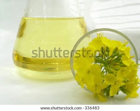 Rapseed Flower Oil