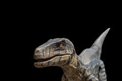 raptor dinosaur or great Velociraptor hunter dinosaur on black background
