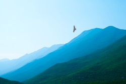 raptor flying over misty mountains with a beautiful valley far below him