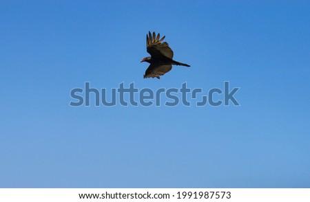 Raptor on the N. California coastline Foto stock ©