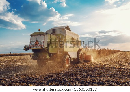 Rare view of harvester in corn field harvesting in autumn. Husbandry concept.