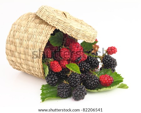 Raspberries and Blackberries fall out from the basket