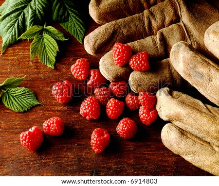 Raspberries and Gloves still life - stock photo