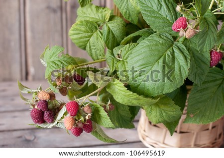 Raspberry on an wooden background - stock photo