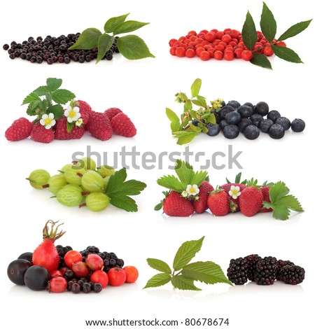 Raspberry, strawberry, gooseberry, blueberry, blackberry, elderberry, rowan, rose hip and sloe, fruit, isolated over white background.