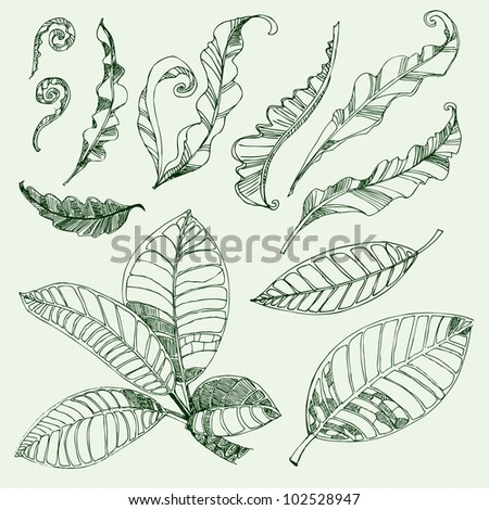 RASTER Set of floral design elements - coffee and fern leafs - stock photo