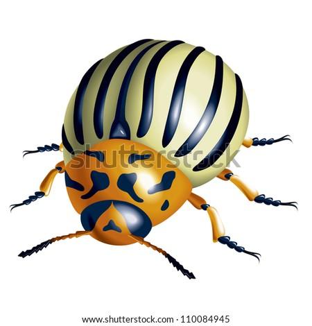 Raster version. Colorado potato beetle. illustration on white background