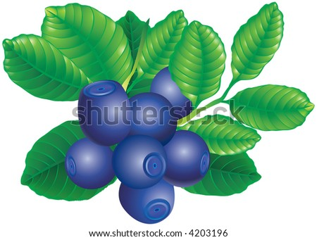 Raster version of vector image of bilberry