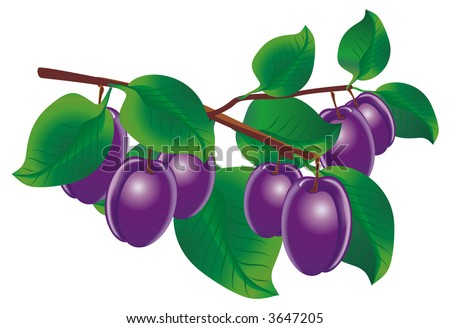 Raster version of vector image of twig of plums